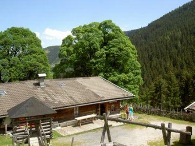 Urige rustikale einfache Almhütte in Leogang auf 1200 m Höhe-max 12 Personen